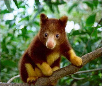 What Endangered Animals Live In The Temperate Rainforest