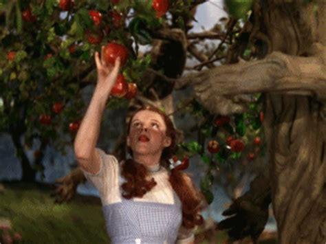 judy garland apple gif find share on giphy