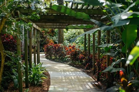 sunken gardens st pete sunken gardens st petersburg
