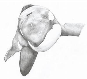 Tilikum The Orca Drawing - tiger1 © 2018 - Nov 3, 2013