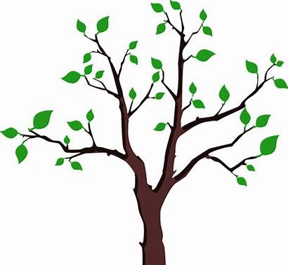 Branches Leaves Clipart Leaf Tree Svg Clip