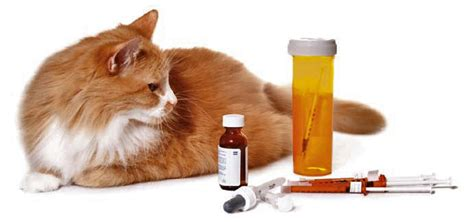 treatment  feline diabetes  cats diet  diabetes
