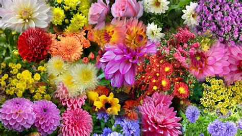 nature wallpapers wallpaper garden autumn flowers