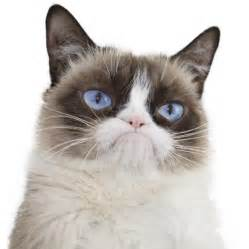what of cat is grumpy cat real grumpy cat