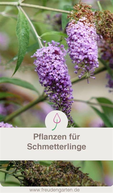 Garten Pflanzen Schmetterlinge by Pflanzen F 252 R Schmetterlinge Garten Bienenfreundlicher