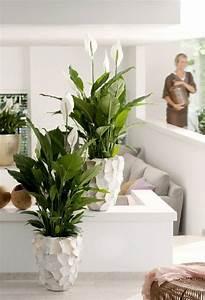 Zimmerpflanze Weiße Blüten : sch ne badpflanzen verwandeln das badezimmer in eine wohlf hloase ~ Markanthonyermac.com Haus und Dekorationen