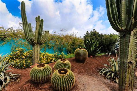 Heller Garten Marrakesch Foto & Bild  World, Landschaften