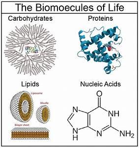 Biomolecules Proteins