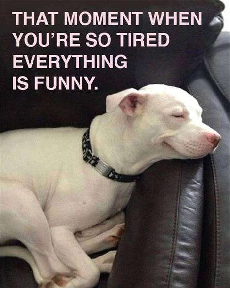 Best 20+ Funny Friday Memes Ideas On Pinterest Funny