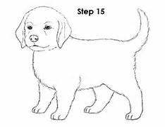 Pics Photos - How To Draw A Puppy  How To Draw A Puppy