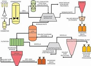 Process Flow Diagram For The Production Of Single Cell Oil