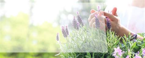 Balkonpflanzen Gegen Mücken by Welche Pflanzen Helfen Gegen M 252 Cken Coop Bau Hobby
