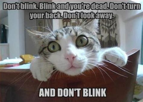 Doctor Who Cat Meme - 1000 images about weeping angel on pinterest supernatural do do and pin it