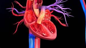 Functioning Of Human Heart 3d Stock Footage Video  100