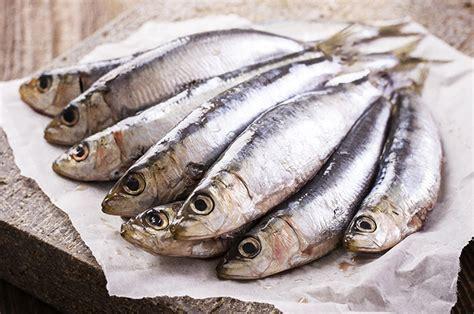 cuisiner les sardines 5 raisons d 39 aimer les sardines today wecook