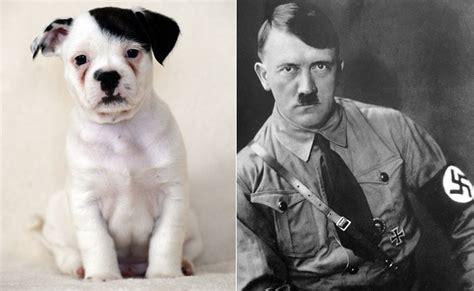 hitler    poor pup    fuehrer