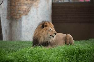 Lion Yawn GIFs - Find & Share on GIPHY