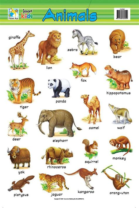 pin  shafi  animals learn english learning english