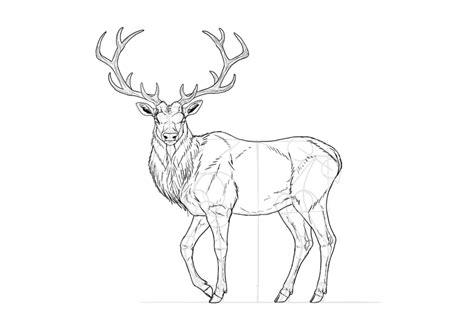 draw  deer step  step