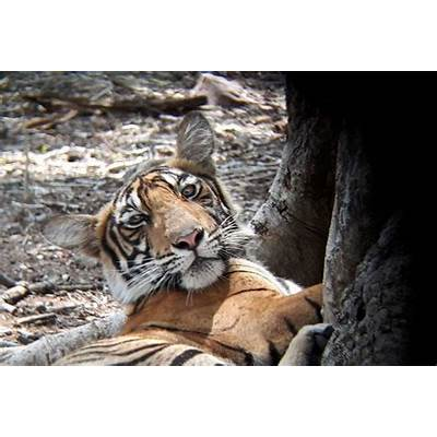 Ranthambore safari zones 1 to 5 are closed in monsoon