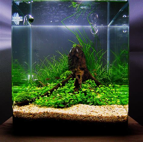 "July 2010 Aquascape Of The Month ""anyplace Anytime"