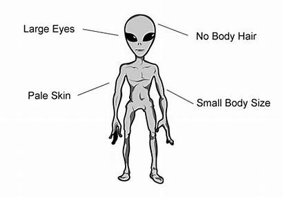 Underground Humans Greys Race Grey Diagram Evolved