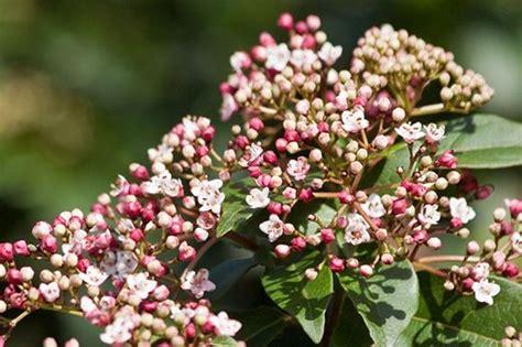Graham Rice Choose 10 Of His Favourite Winterflowering