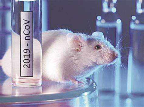 Preliminary data from animal study shows immune response ...