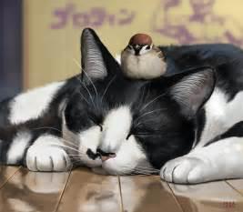 cat fan cats cats fan 31954964 fanpop