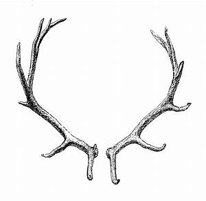 The gallery for --> Antlers Transparent