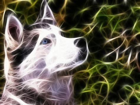 Spirit Animal Wallpaper - fractals dogs spirit 1024x768 wallpaper animals dogs hd