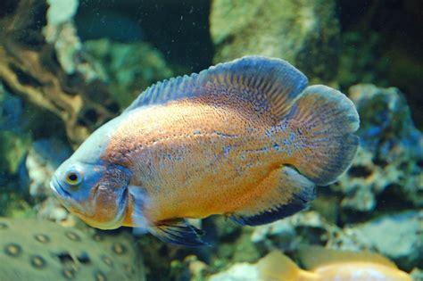 bureau central des archives administratives militaires aquarium de limoges tarifs 28 images tarifs aquarium