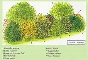 Quels Arbustes Pour Une Haie : haie champ tre ~ Premium-room.com Idées de Décoration