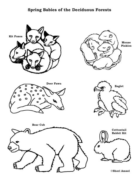 baby animals   deciduous forest coloring page