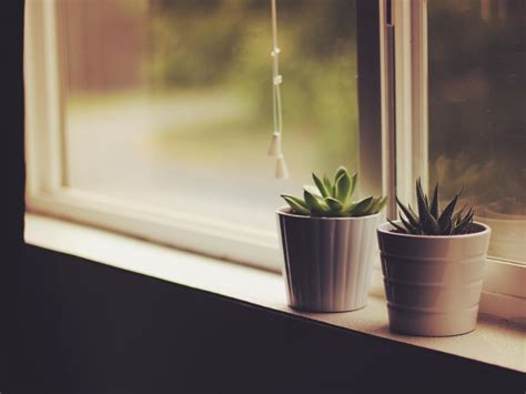 Sill Plants by Wallpaper Flower Pots Window Sill Indoor Plants Hd