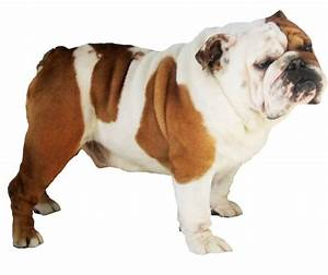 50+ Amazing Bulldog Pictures | Golfian.com