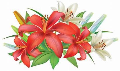 Flowers Clipart Lilies Decoration Lily Lilium Flower
