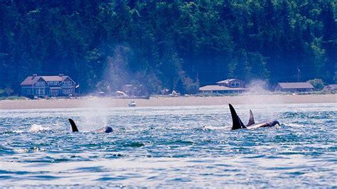 persistent organic pollutants   marine food chain