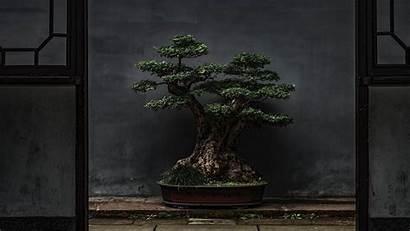 Bonsai Tree Plant 4k Background Door Decorative