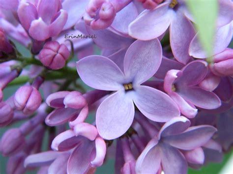 popular flowers top 10 most popular flowers flowers gardening