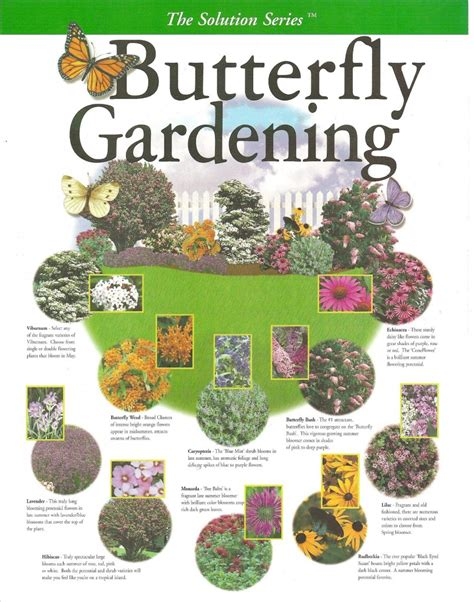 create your own butterfly garden pinlavie