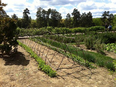 Grape Trellis by Garden Ideas Grape Trellis Photograph Grape Vine