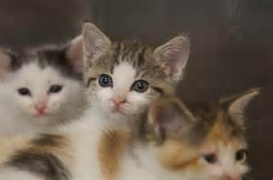 petsmart cats kitten season numbers pose problems for shelters