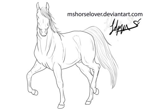 moh vol  lesson   arabian horse coloring pages lineart arabian stallion  horse