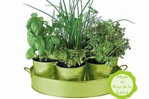 Pots d39aromates a faire pousser persil ciboulette for Herbes aromatiques faire pousser persil vitamines
