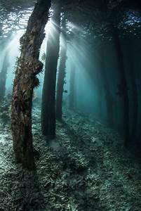 safari scuba underwater forest