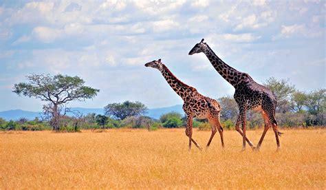 xpx safari  kb