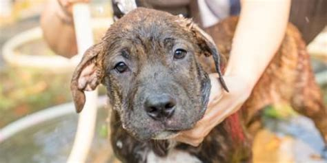 The breeds counted as high risk were german shepherds, akitas, pit bulls, doberman pinschers, chow chows and rottweilers. Why Home Insurance Companies Have Dog Breed Restrictions - InsureU Colorado - West Adams | NearSay