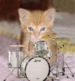 les animaux musiciens gifs anim 233 s et images orchestre