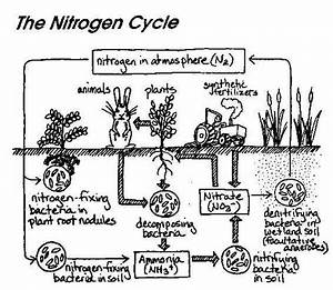 Free coloring pages of nitrogen cycle diagram
